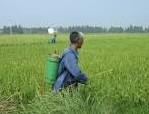 农药行业分析:老问题依然严重